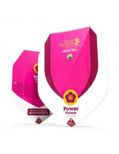 Power Flower RQS
