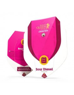 Sour Diesel RQS