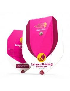 Lemon Shining Silver Haze RQS