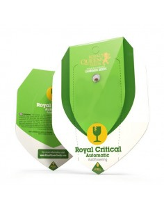 Royal Critical automatic RQS