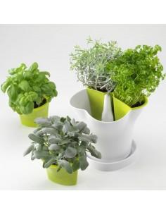 Herb Pot - Stewart Garden