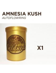 GOLDSEEDS - AMNESIA KUSH - Autoflowering