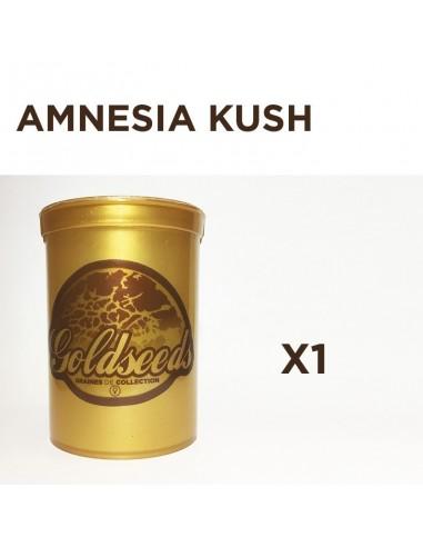 GOLDSEEDS - AMNESIA KUSH