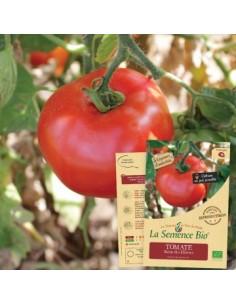 Tomate Reine des Hâtives