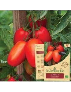 Tomate Prince Borghese