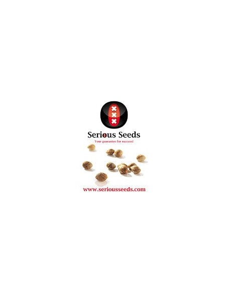 SERIOUS SEED