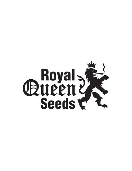 ROYAL QUEENS SEEDS